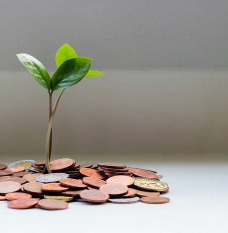 plant growing out of coins on table
